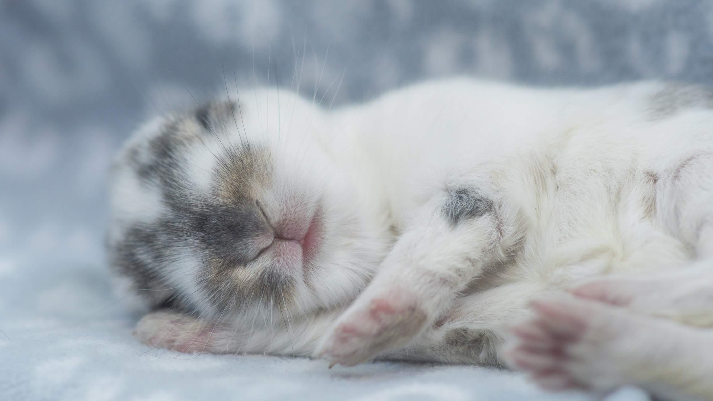 Little rabbit sleeping in his bed