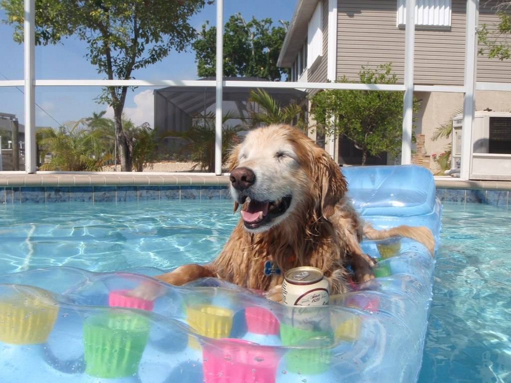 Dog on float in pool