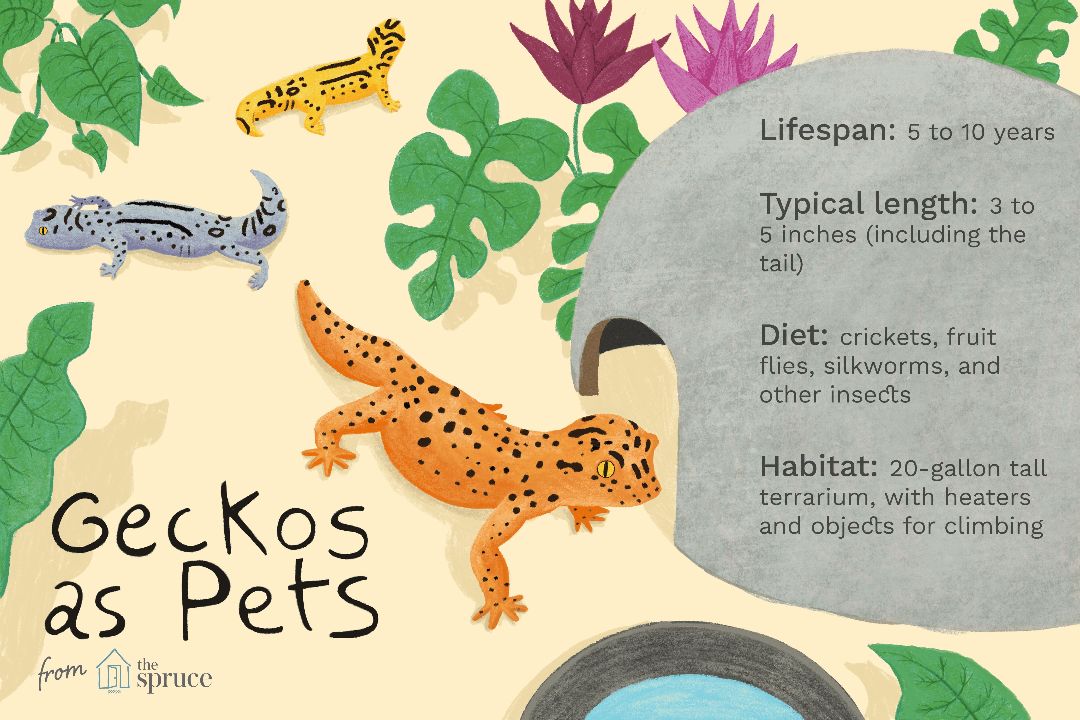 Ilustración sobre geckos como mascotas