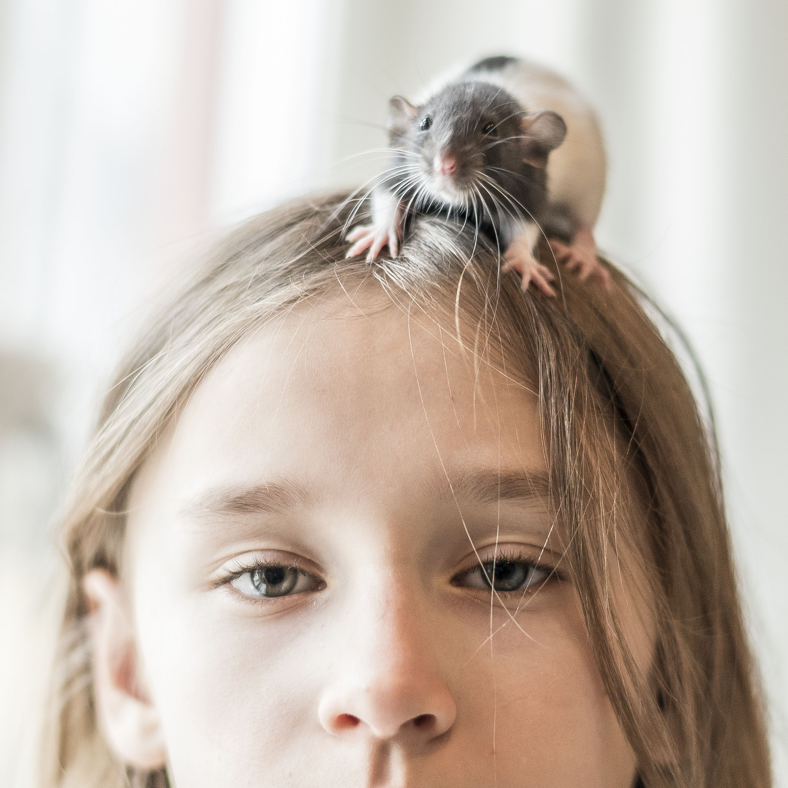 What to Do If Your Pet Rat Has Lice