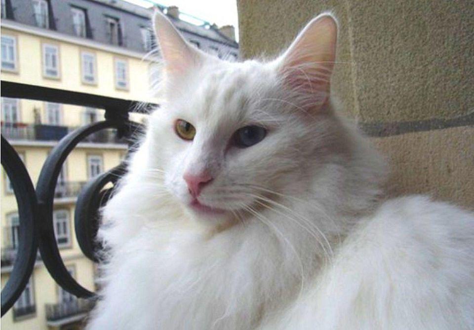 Photo of Deaf Cat Olaf