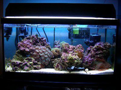 15g Reef Tank Image