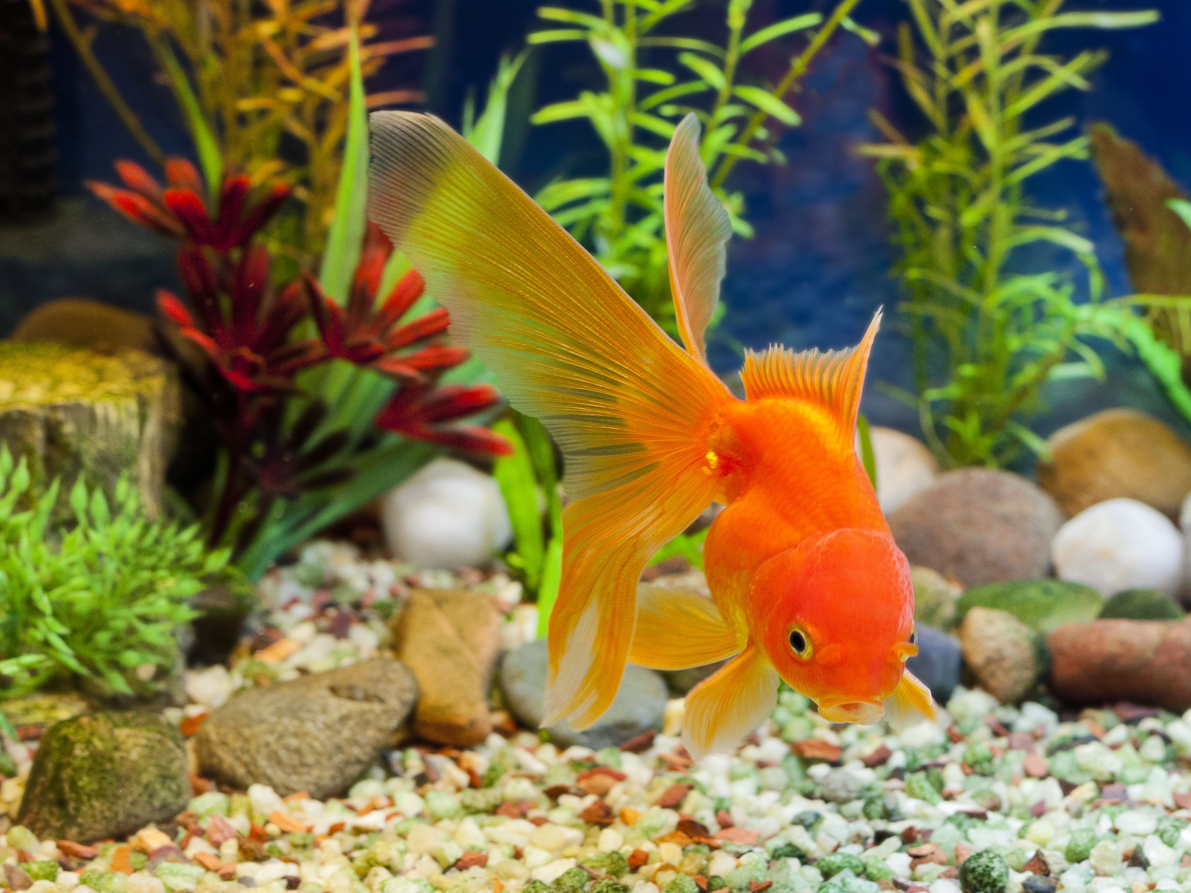 How To Replace Aquarium Substrate