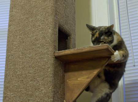 9 diy cat tree plans you can get for free a cat on a carpeted cat tower solutioingenieria Gallery