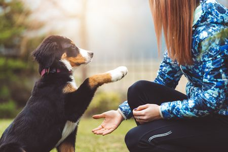 Puppy Training Tips for New Owners