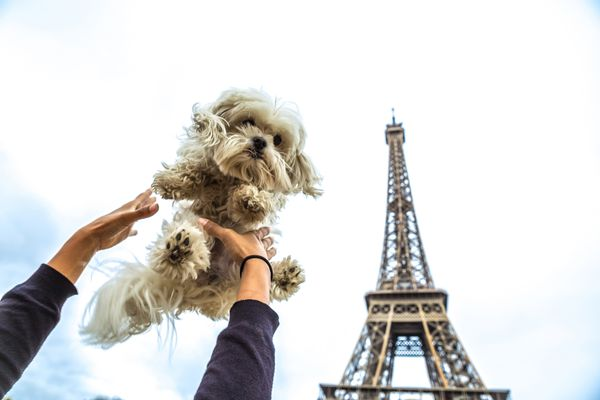 Small white dog being held in the air in front of the Eiffel Tower.