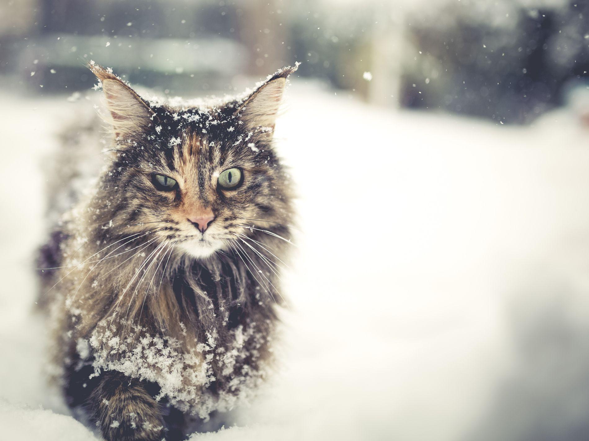 9 Rarest Cat Breeds