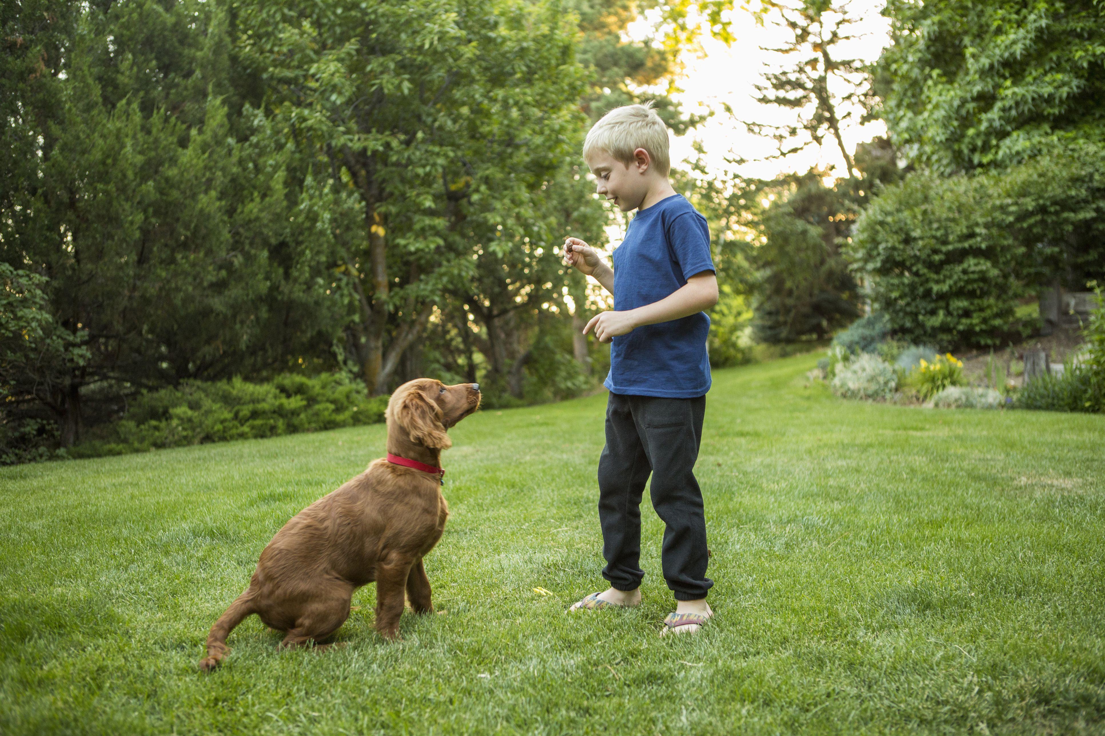 Caucasian Boy Training Dog in Grass