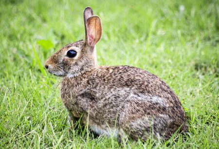 Should I Let My Domestic Rabbit Run Free?
