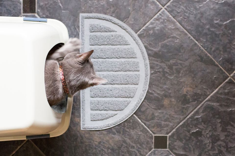 Aerial view of cat inside litter box with rug on tile floor.