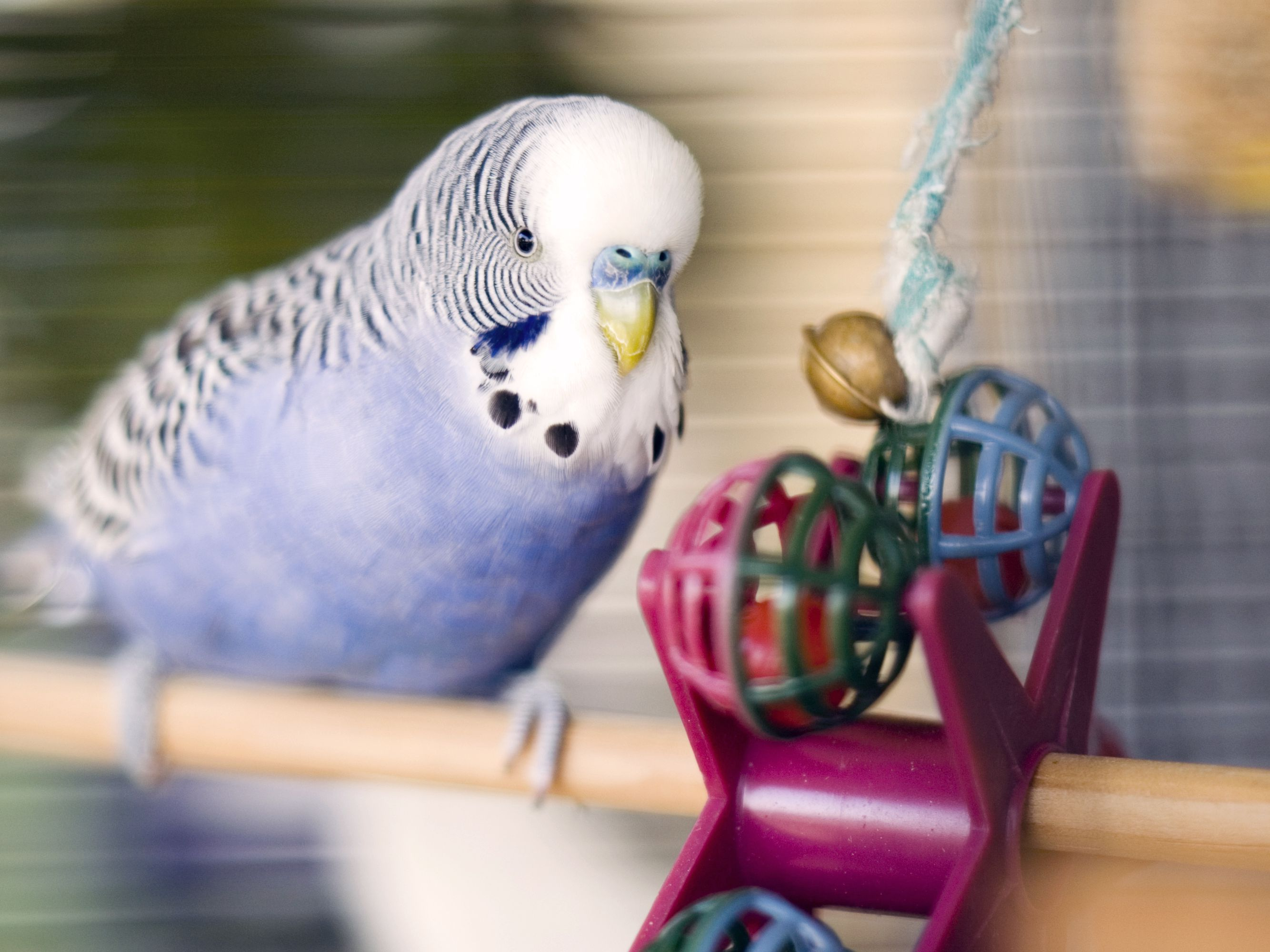 8 Top Small To Medium Pet Birds That Can Talk