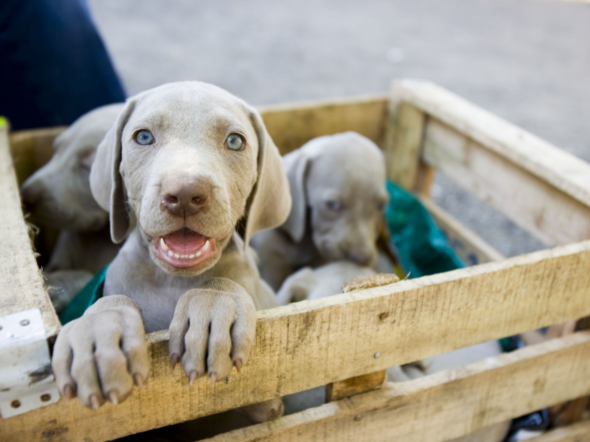 Avoid Bad Dog Breeders: Ask Questions Before You Buy