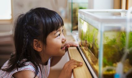 Young girl looking in fish tank