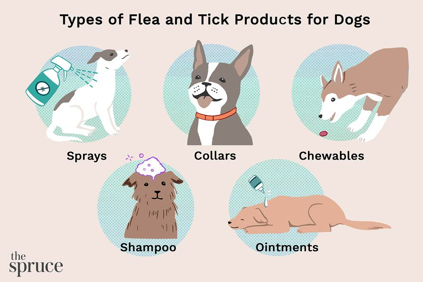 Best Flea and Tick Products for Dogs