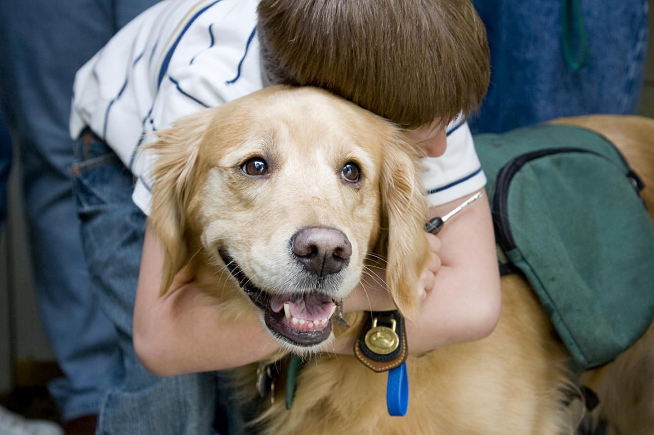 Child with a therapy dog
