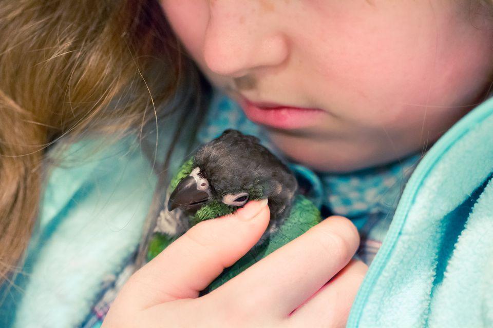 Girl Snuggling with Pet Bird