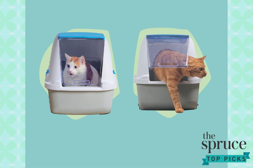 Best Automatic Litter Boxes