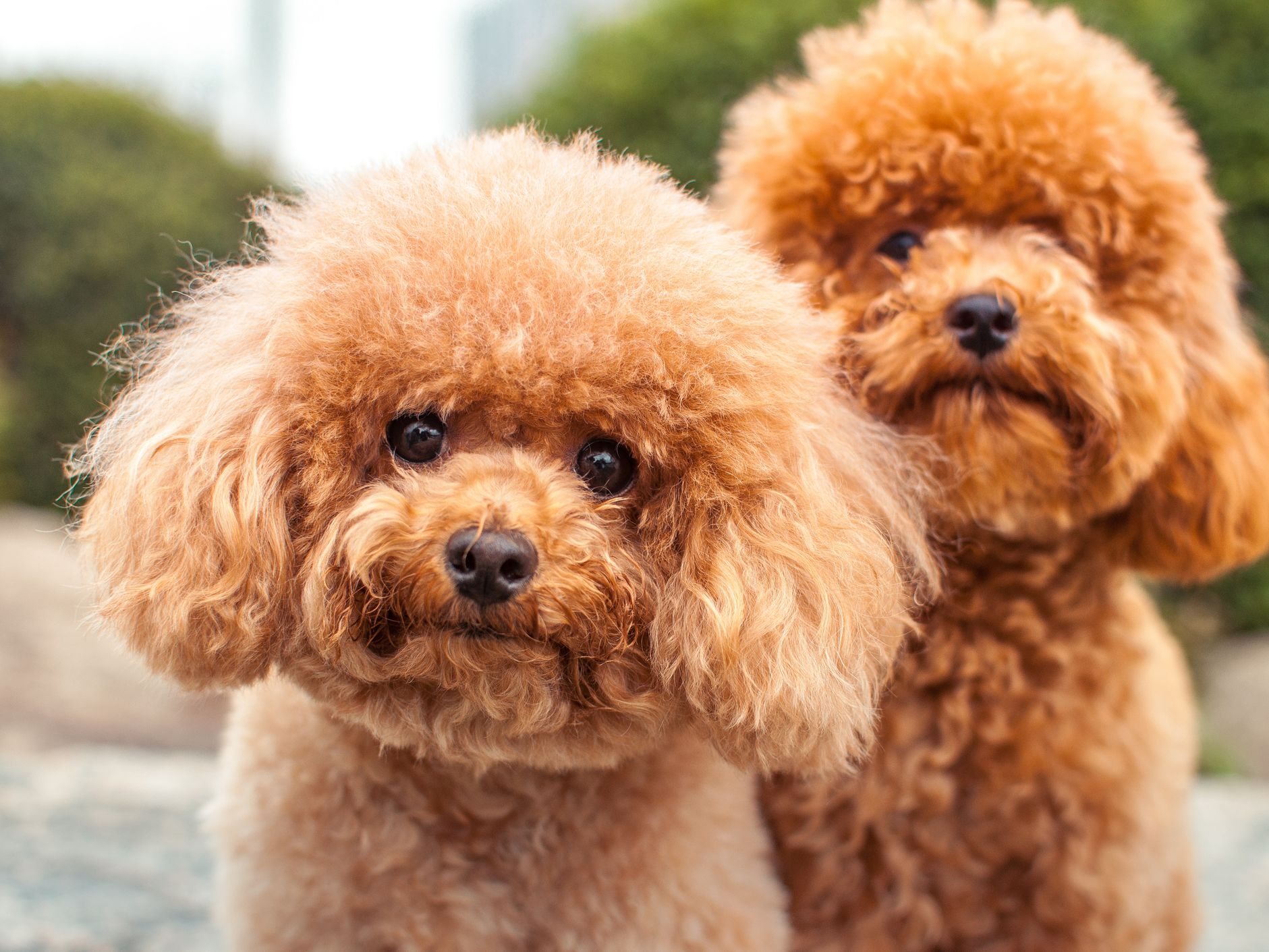 Best Names For Fluffy Dogs