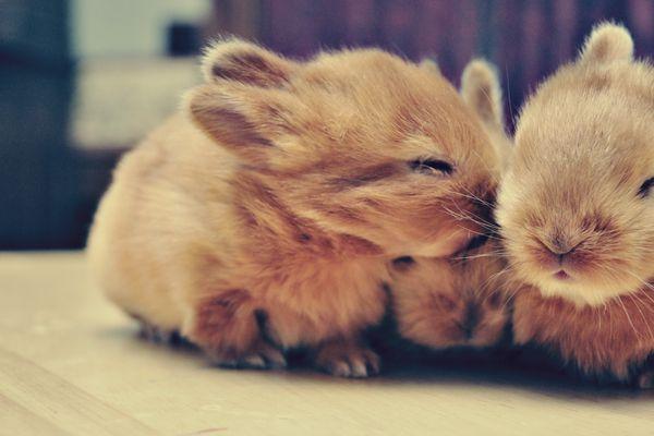 rabbits smooching