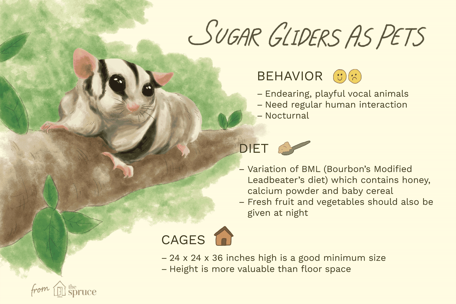 Keeping and Caring For Sugar Gliders as Pets