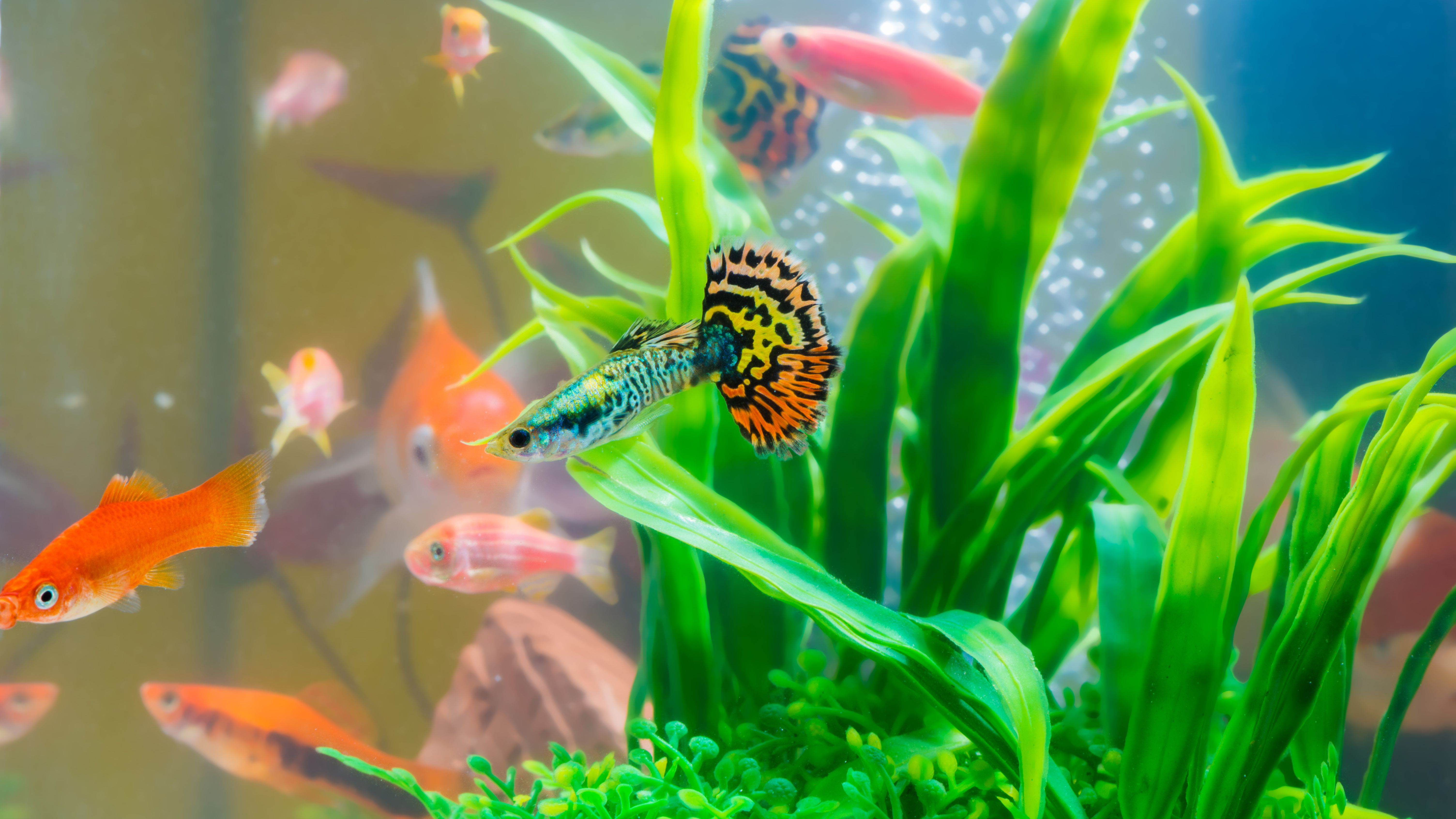 Mini Aquariums: the Pros and Cons of Small Fish Tanks