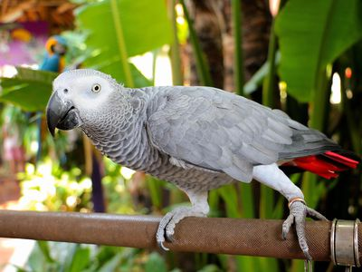 Choosing a Bird That Will Talk