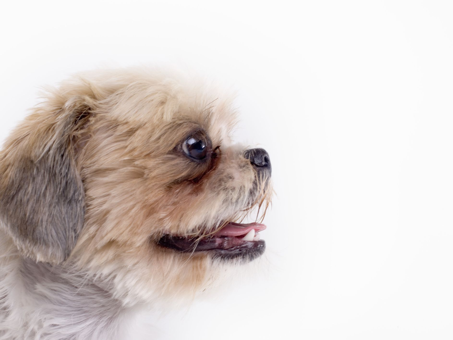 What to Do If Your Dog Has Excessive Tearing and Eye Drainage