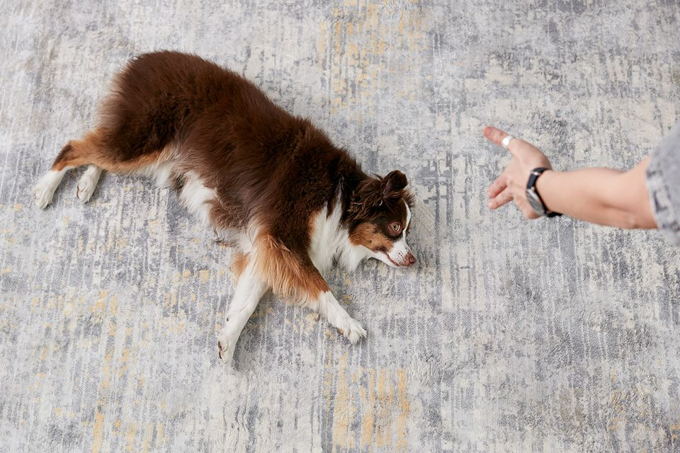 a woman teaching an Australian shepherd to play dead