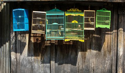 Birds In Cage Against Wooden Wall For Sale At Market
