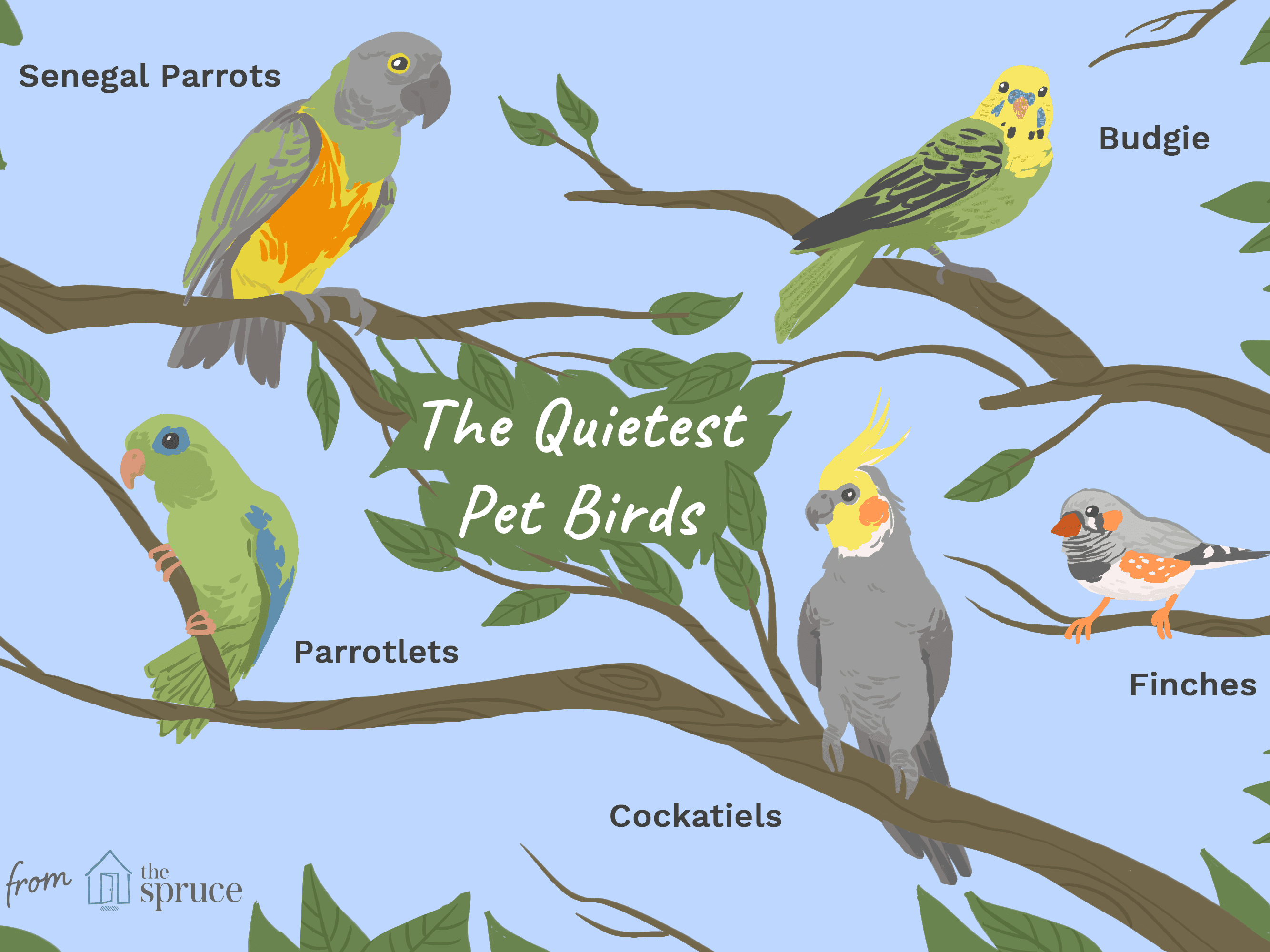 8 Top Quiet Pet Bird Species