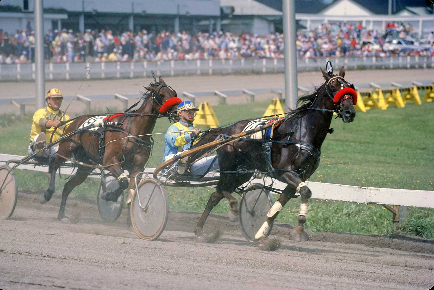 American standardbred horses racing on a track