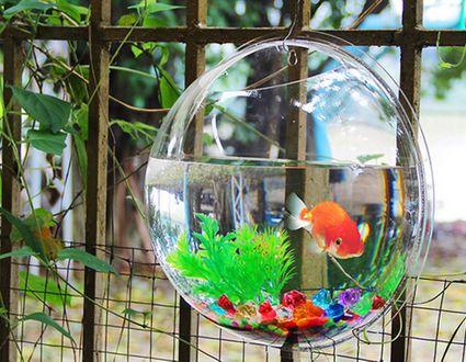 Fish bowl wall mount