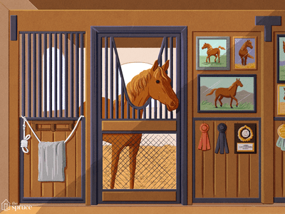 Buying Your First Horse - Is Older or Younger Better?