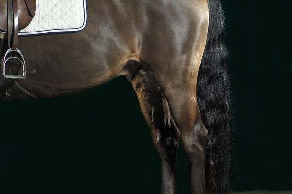 Hindquarters of bay horse wearing an English saddle.