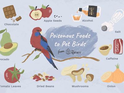 10 Tasty and Healthy Treats That Birds Love