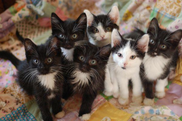 Black and white kittens on quilt