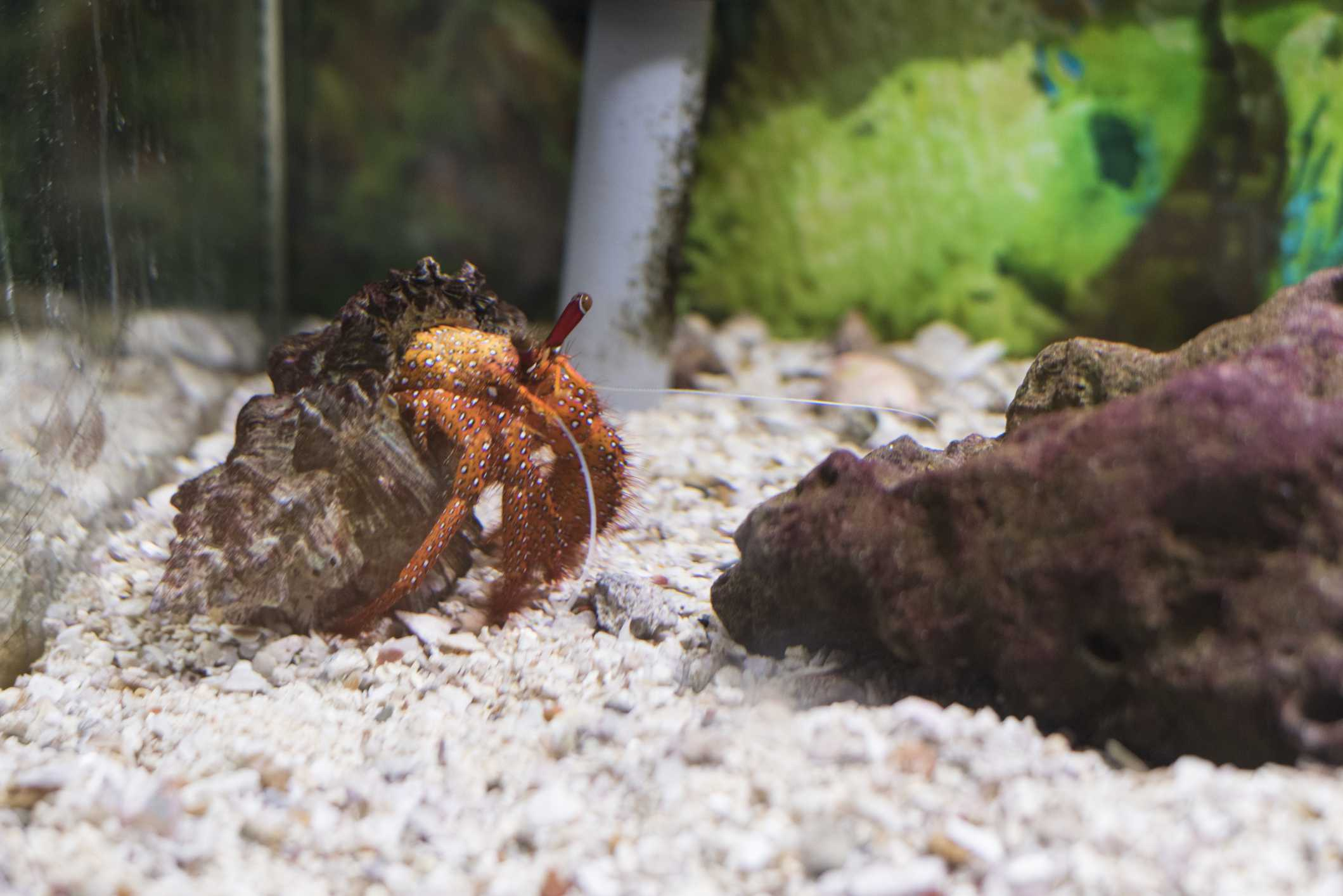 How To Set Up A Sand Tank For Pet Hermit Crab