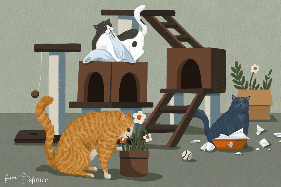 Ilustración de malos comportamientos de gato
