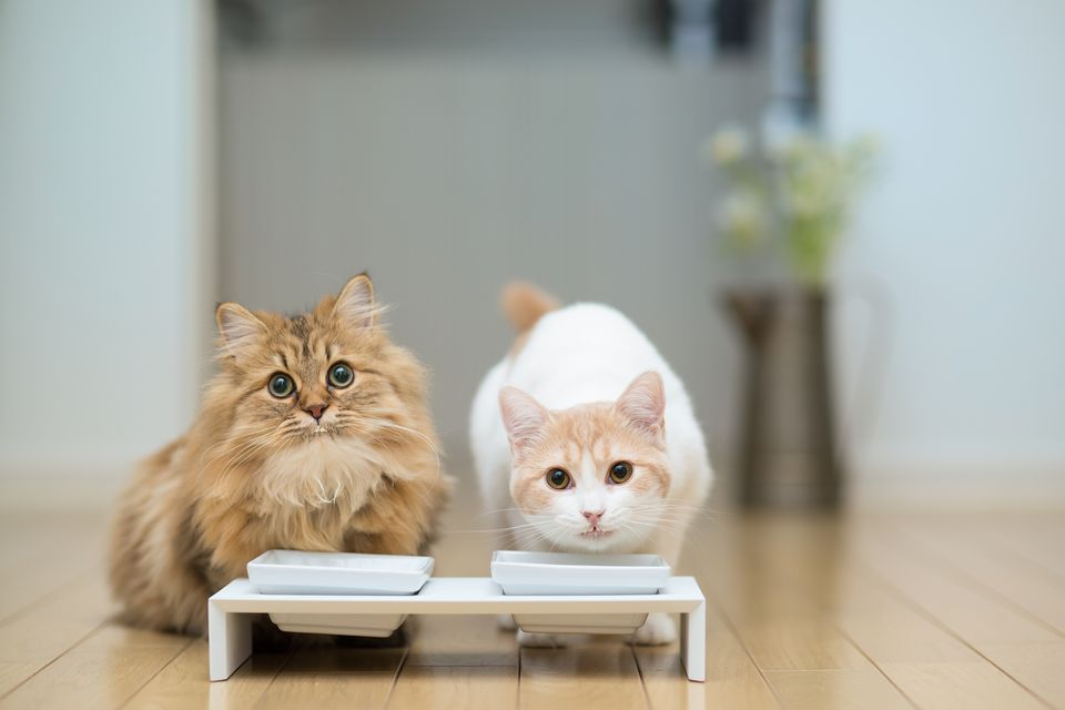 Two cats with milk around mouths