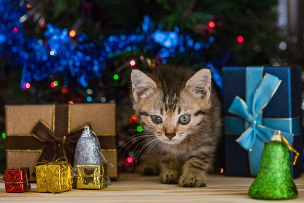 Kitten among presents