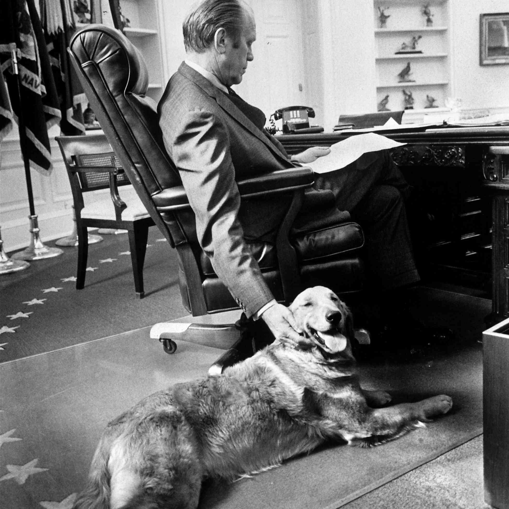 Noviembre de 1974: Pres.  Ford estudia asuntos presupuestarios en la Oficina Oval mientras acaricia al Golden Retriever Liberty.