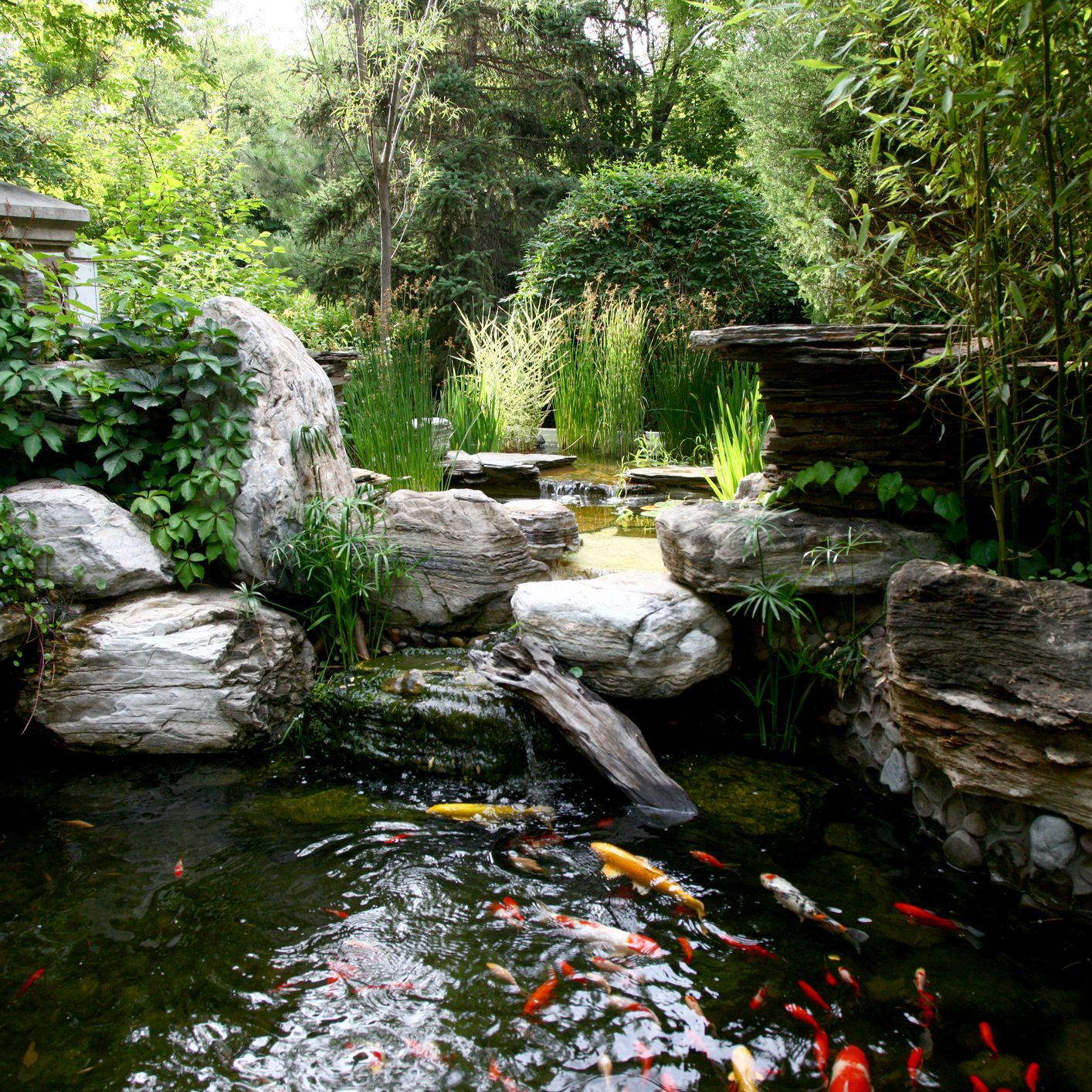 Aquarium Fish For Outdoor Fountains And Ponds