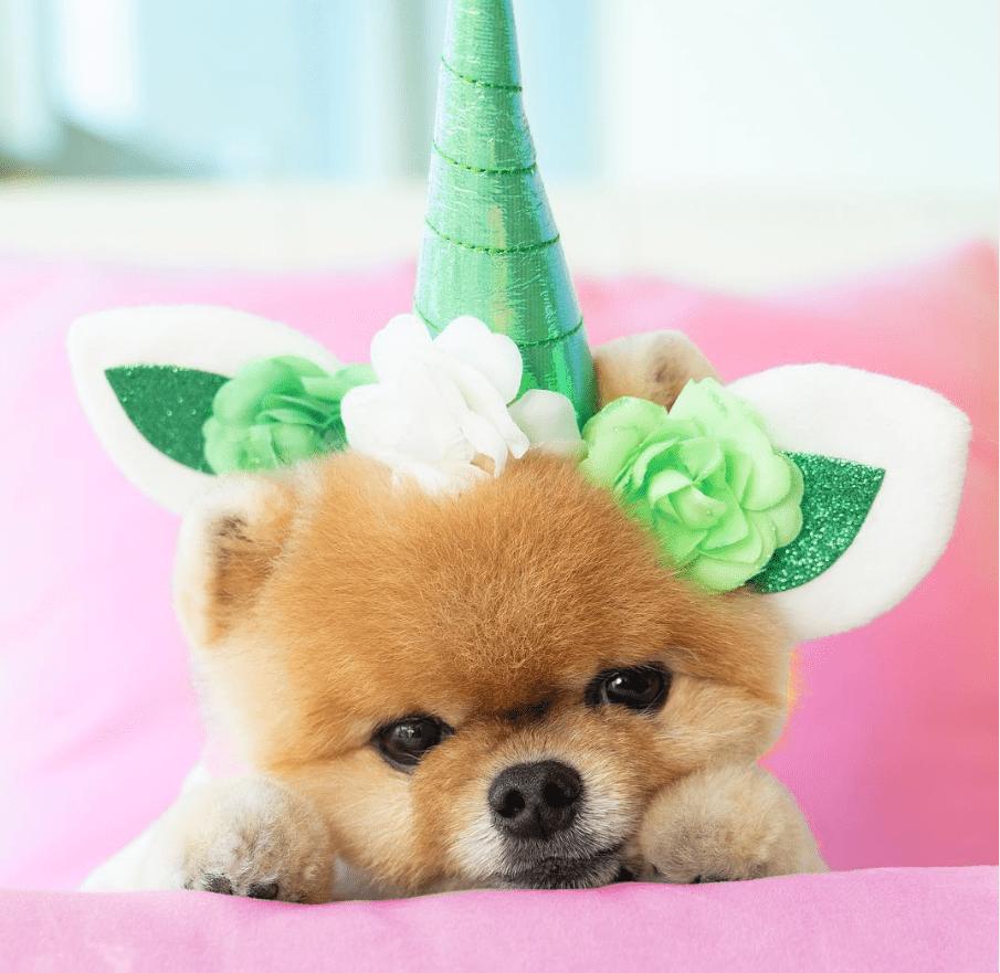 Jiffpom with unicorn horn.