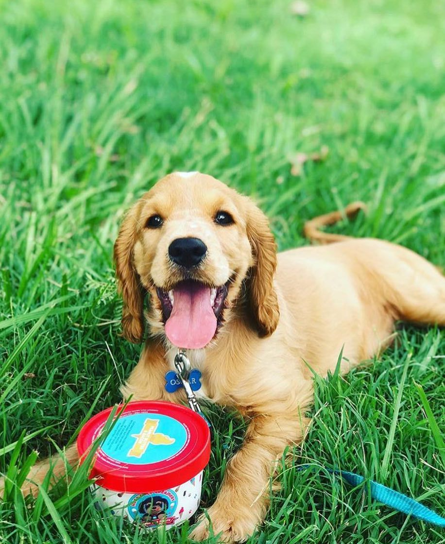 10 Ways To Have The Best Birthday Party For Your Dog