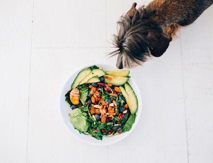 dog sniffing salad