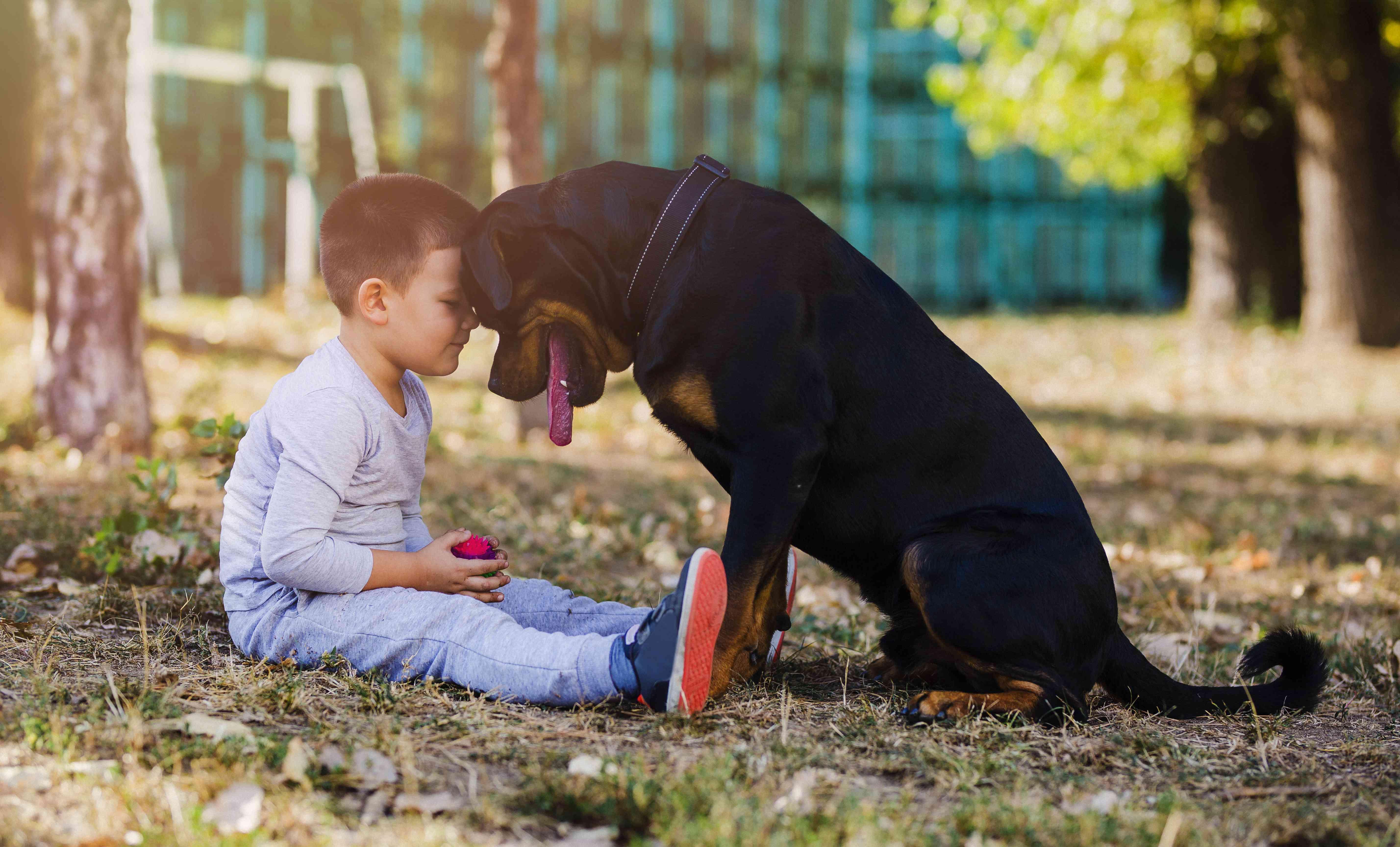 Niño y su gran perro sentado en el suelo en el patio trasero