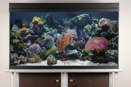 R Aquarium Setup In 10 Easy Steps
