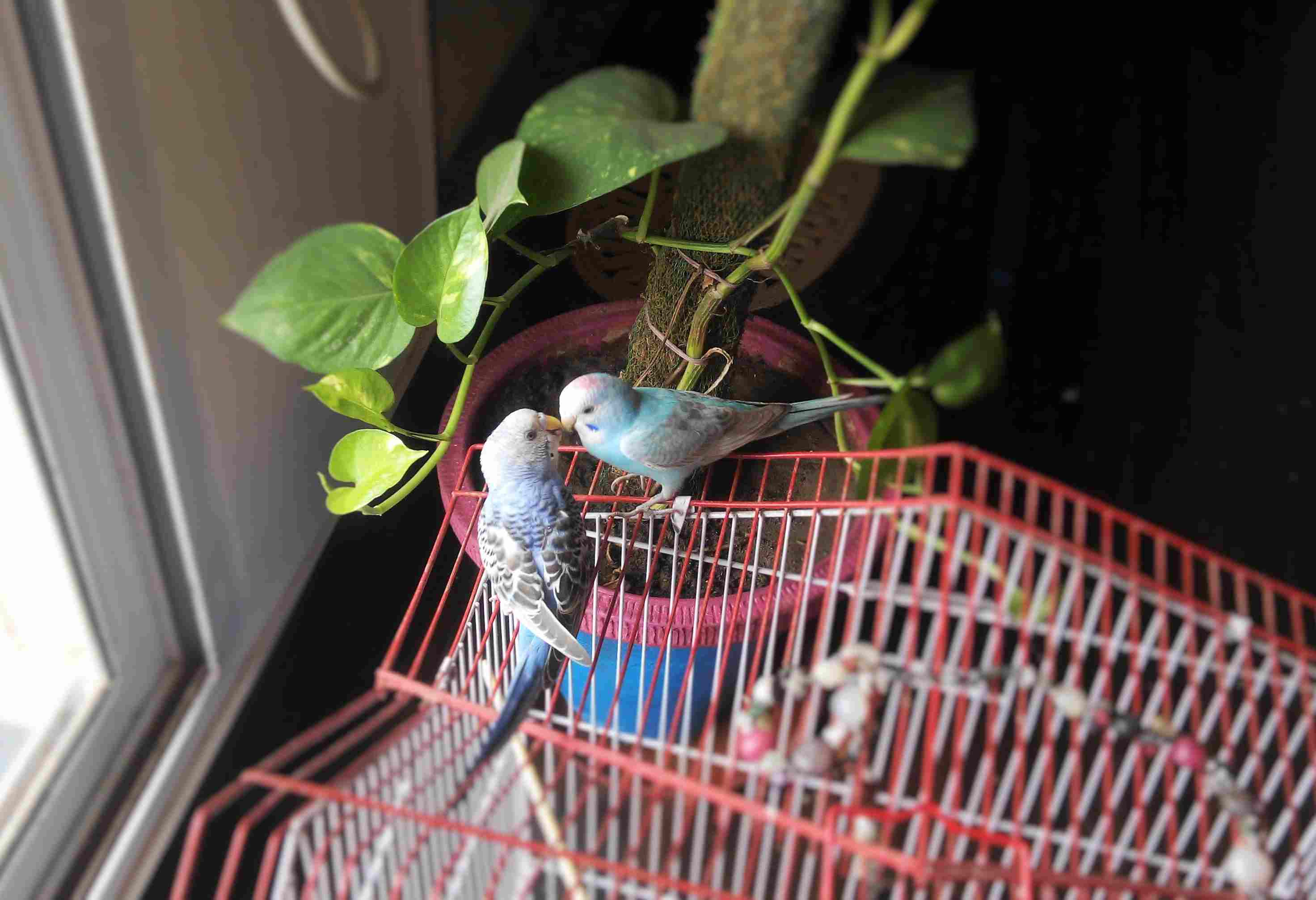 Why You Should Keep Your Bird Inside