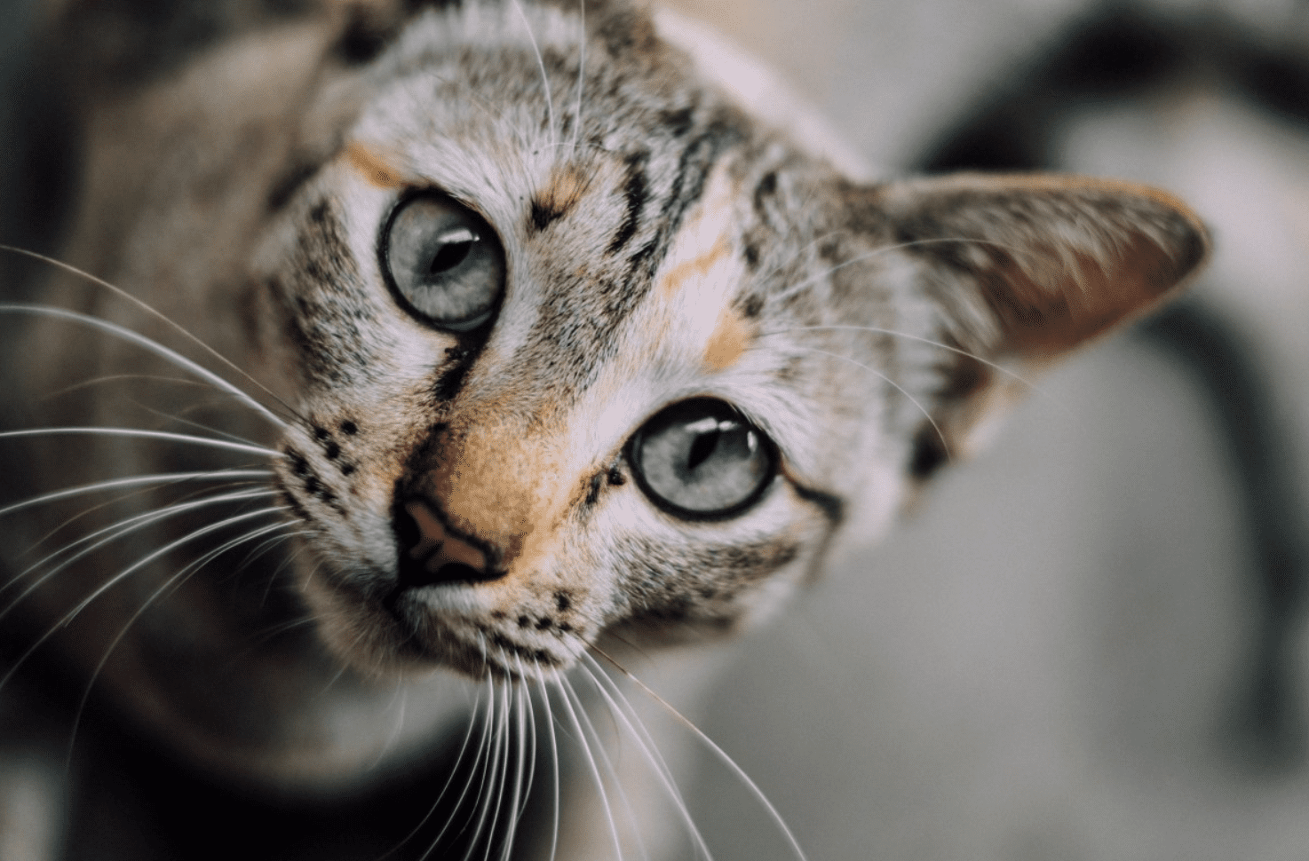 11 Things Only Cat Owners Understand