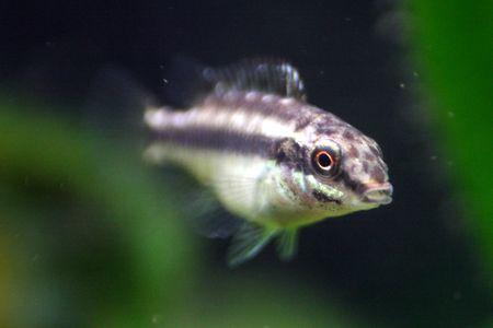 How To Feed Aquarium Fish Fry